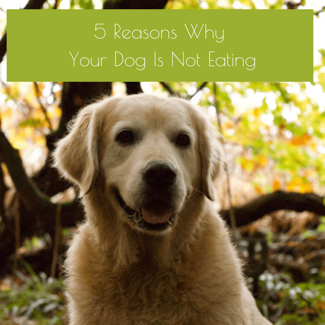 Natural Healing for Dogs